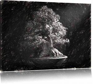 arbre fusain TOP 0 image 0 produit