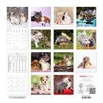 'Calendrier mural animaux amis 201830x 30cm de la marque Alpha Edition image 1 produit