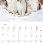 'Calendrier mural animaux amis 201830x 30cm de la marque Alpha Edition image 2 produit