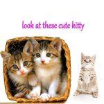 CAT masseur Roller visage Massage, Willmall 2pcs Silicone Outil de toilettage pour Kitty pour animal domestique Chien Chaton confortable Transat masseur Soulagement de la marque WillMall image 1 produit