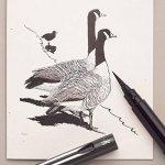 Pentel Pinceau Brosse Stylo plume–noir de la marque Pentel image 3 produit