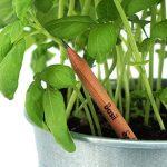 Sprout – crayons de couleur | boîte de 8 crayons en bois naturel bio de la marque SPROUT® image 1 produit