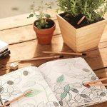 Sprout – crayons de couleur | boîte de 8 crayons en bois naturel bio de la marque SPROUT® image 4 produit